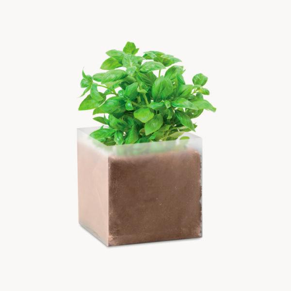 bolsita-semillas-hierbas-aromaticas-albahaca