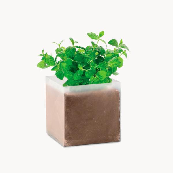 bolsita-semillas-hierbas-aromaticas-menta