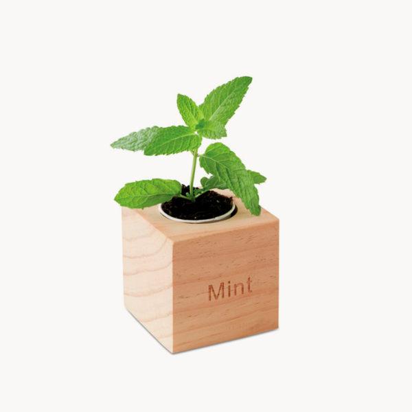 maceta-madera-semillas-menta